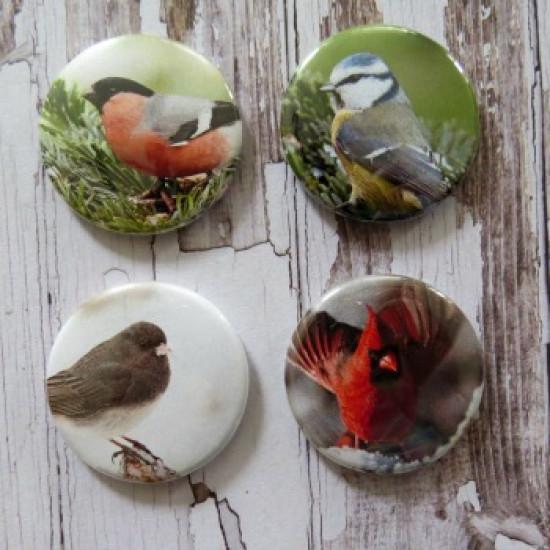 Gros Badges-oiseaux
