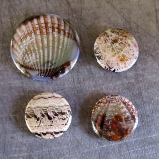 Badge texture coquillage-2